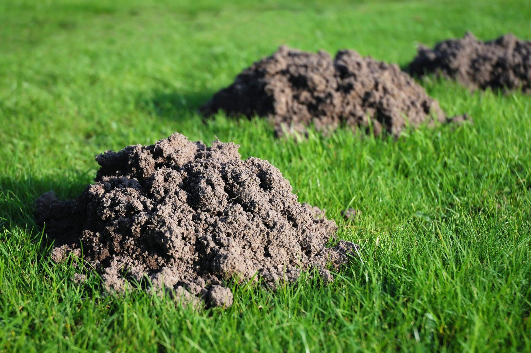 annoying mole hills